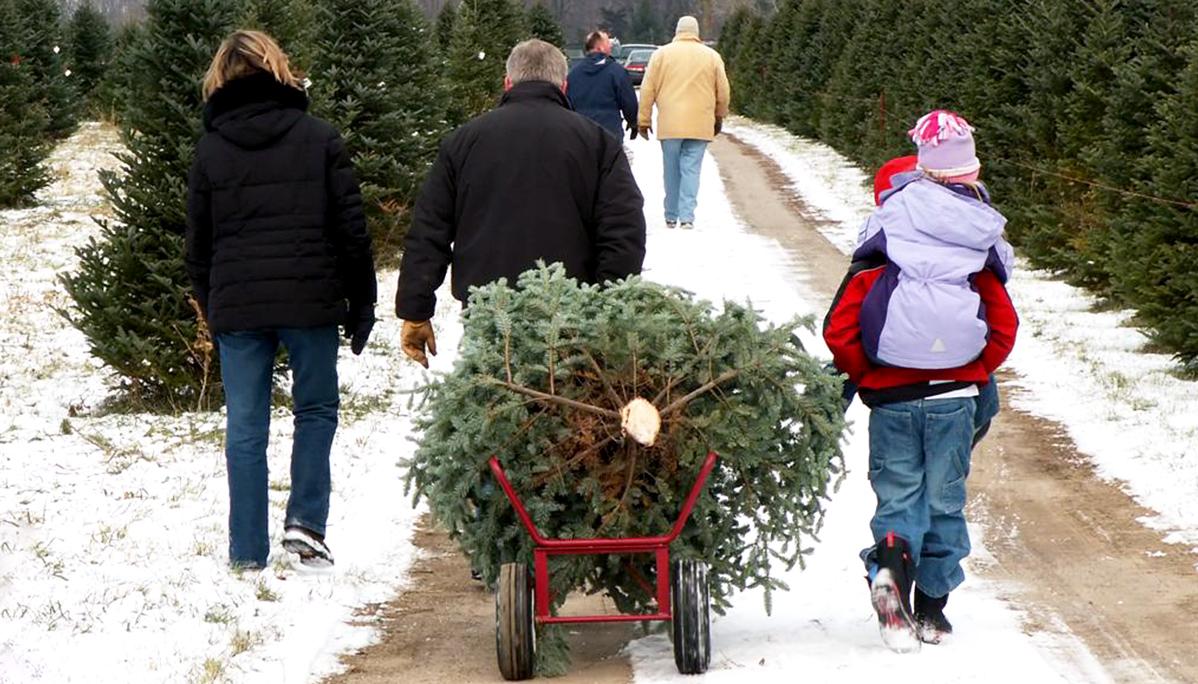 Bringing Home Christmas Tree